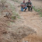 Texas coyote trapping