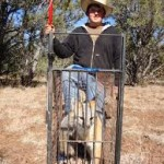 cage trap grey fox