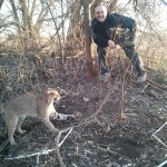 how to trap catch kill bobcat