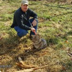 N and J coyote trapping