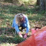 trapperchick setting coyote trap trapping