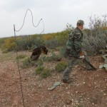 bobcat trapping Flag