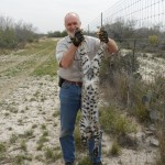 Stan holding a nice bobcat a Texas Predator School