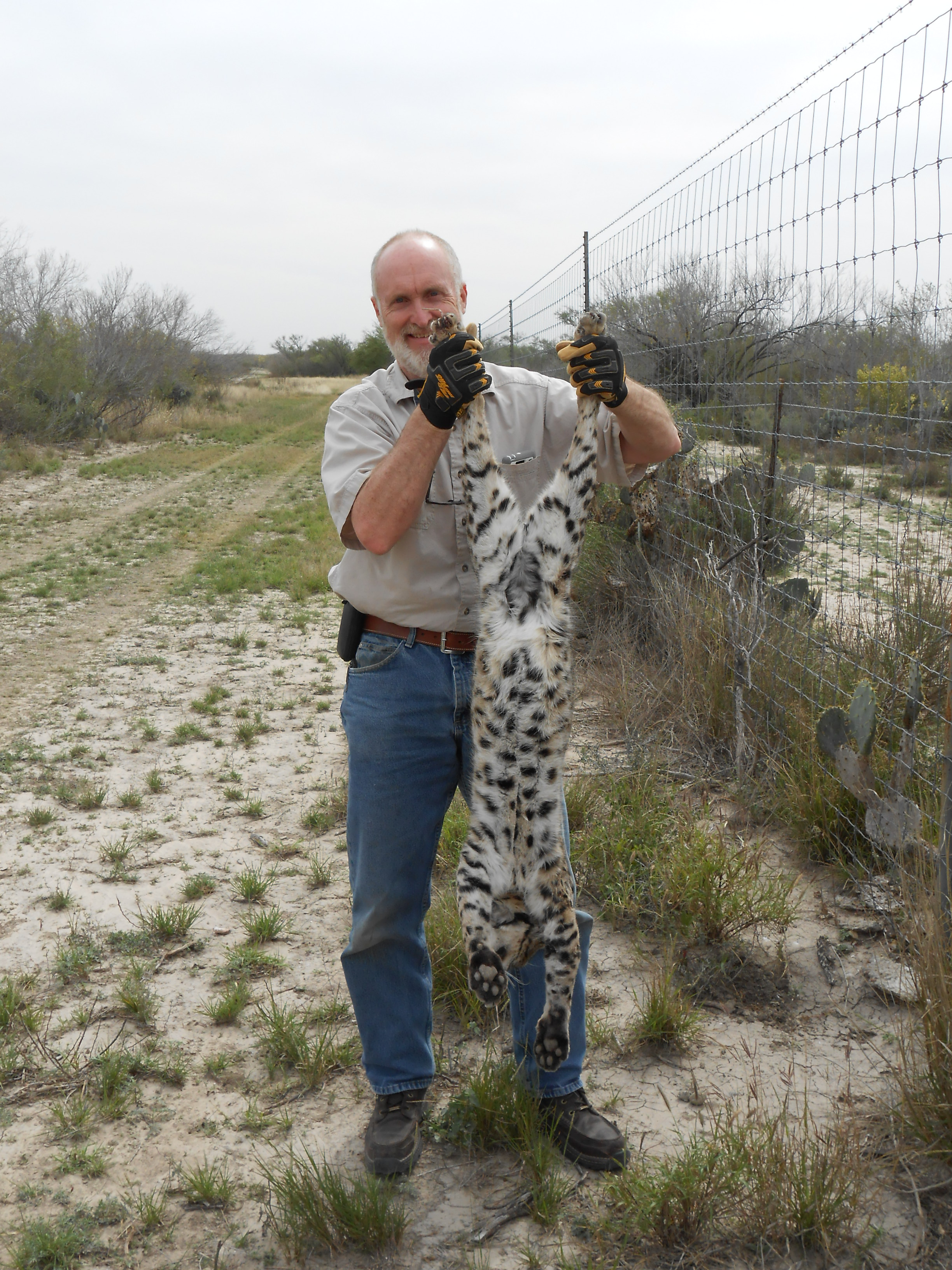 Lure how to trap catch kill coyotes stan holding a nice bobcat a texas predator school sciox Image collections