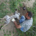 predator control trapping in Texas
